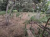 Ótimo terreno em jabuticatubas
