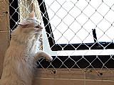 Rede de protecao para janelas e sacadas -camanducaia e regiao