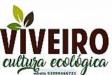 Viveiro cultura ecologica