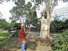 Corte e poda de arvores;jardinagem/paisagismo/limpeza de ter