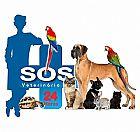 Zoohotel hospedagem cães em sjc - são jose dos campos
