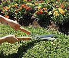 Jardinagem e paisagismo no tatuape (11)2254-9578//2153-9405
