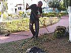 Jardinagem em guarulhos
