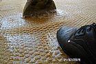 Secagem de carpetes molhados  plantão24 h
