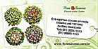 Coroas de flores entrega 100 cidades mg (31) 3281-1113