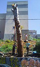 Poda  e remocao de arvore , limpeza de terreno 97091-9227
