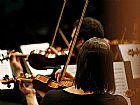 Cursos de violino na zona leste e regioes
