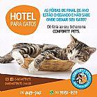 Hotel e creche para gatos em sp