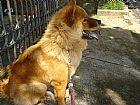 Hospedagem de animais e dog walker - passeio para caes