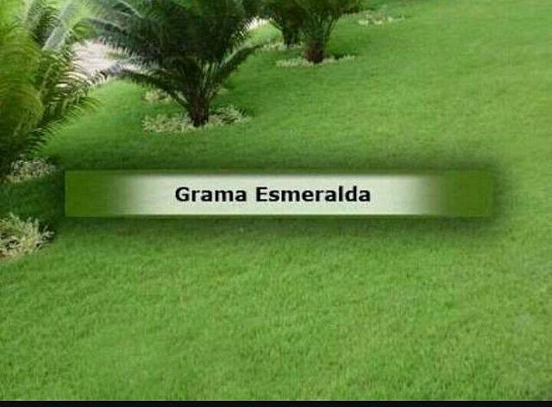 Tapetes de Grama Esmeralda e Batatais
