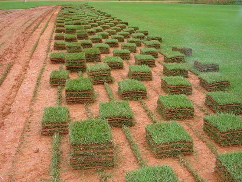 Tapetes de Grama esmeralda a partir de R4, 70m