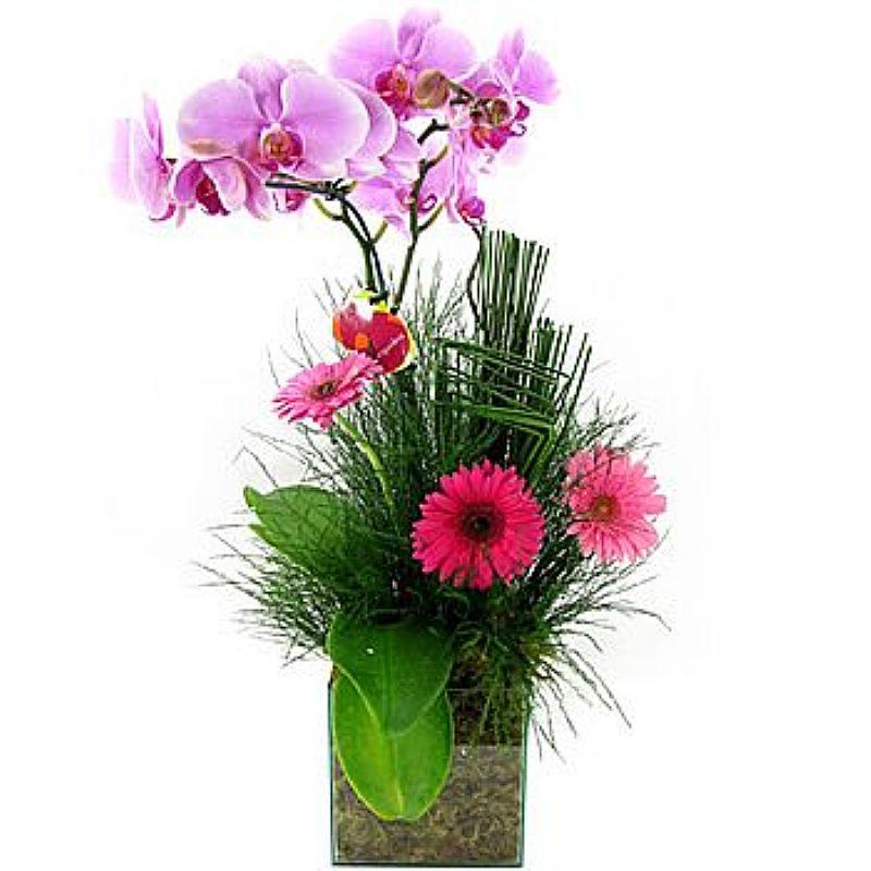 Orquideas mg,    vendas de orquideas,    entregas de orquideas mg