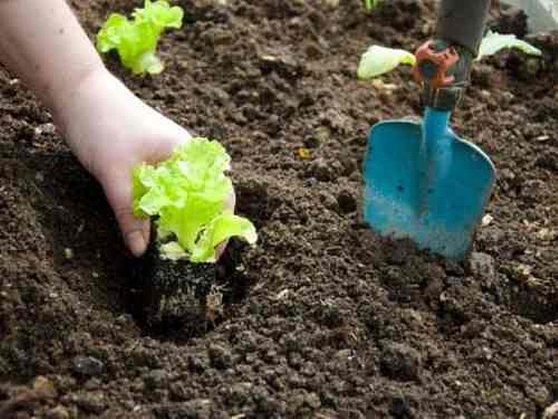 terra preta preparada para horta ou jardim (62)985701915