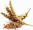 Trigo,  milho,  batatas,  farinha para venda