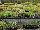 mudas nativa para reflorestamento do cerrado