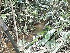 Belo terreno com mata nativa em guararema