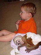 capuchinho, Repteis,  Masculino,  Femeas