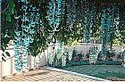 Jade muda de trepadeira em Goiania - Goias  com 1 mt whats app (62)85701915