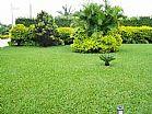 grama esmeralda entregue e plantada R$ 8.50 (62)85701915 (62)94152270