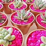 Pedras cristal para jardins e vasos
