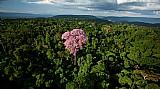Fazenda compensação ambiental icmbio,  40.000ha -am