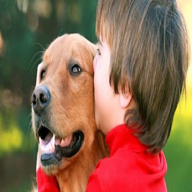 Passeador e cuidador de cachorros